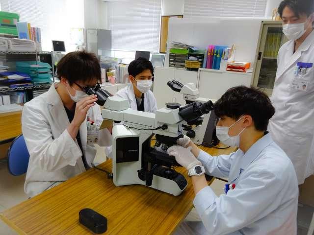 臨床検査技師によるグラム染色研修
